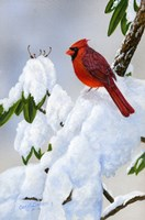 Cardinal On Snow Fine Art Print