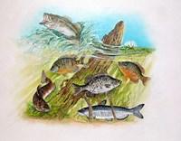 Fishing Derby Fine Art Print