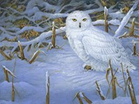 Incoming Snowy Owl Fine Art Print