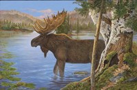 Majestic Moose Fine Art Print