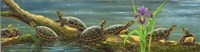 Suncatchers Painted Turtles Fine Art Print