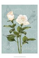 "Cream Rose II by Jade Reynolds - 13"" x 19"""