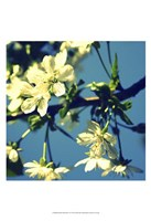 "Summer Blossom II by Lillian Bell - 13"" x 19"""