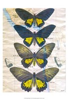 Butterfly Map II Framed Print