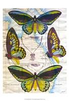 Butterfly Map III Framed Print