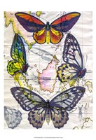 Butterfly Map IV Framed Print
