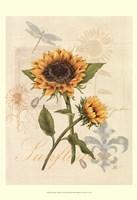Romantic Sunflower II Framed Print