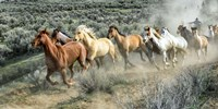 Stampede I by PHBurchett - various sizes, FulcrumGallery.com brand