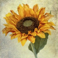 Lush Vintage Florals I Fine Art Print