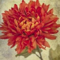 Lush Vintage Florals III Fine Art Print