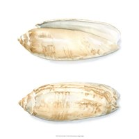 "Watercolor Shells V by Megan Meagher - 18"" x 18"""