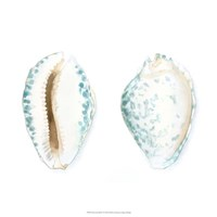 "Watercolor Shells VI by Megan Meagher - 18"" x 18"""