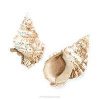 "Watercolor Shells VII by Megan Meagher - 18"" x 18"""