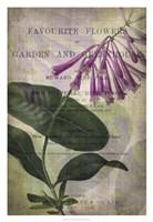 """Favorite Flowers III by John Butler - 22"""" x 32"""""""