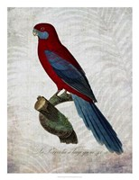 """Parrot Jungle II by John Butler - 20"""" x 26"""" - $37.49"""