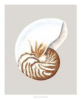"Nautilus by Michael Willett - 18"" x 22"""