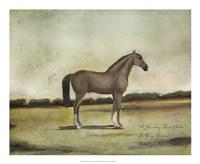 A Strawberry Roan Hunter Framed Print
