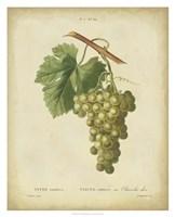 """Antique Bessa Grapes II by Pancrace Bessa - 26"""" x 32"""""""