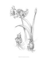 "Botanical Sketch IV by Ethan Harper - 18"" x 22"""