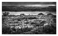 Views of Ireland VII Fine Art Print
