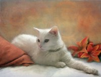 Bijou Fine Art Print