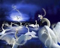 Wild Swans Fine Art Print