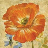 Primavera II by Pamela Gladding - various sizes