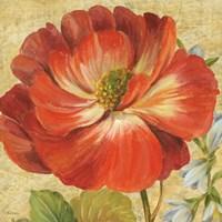 Primavera IV by Pamela Gladding - various sizes
