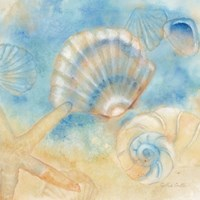 Watercolor Shells II by Cynthia Coulter - various sizes