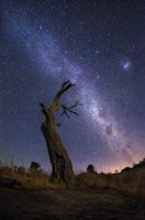 Night Sky 3 by Lincoln Harrison - various sizes