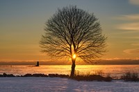 Eye of the Tree by Michael Blanchette Photography - various sizes