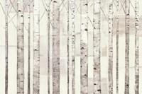 Birch Trees on White by Avery Tillmon - various sizes