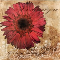 Gerbera Italia by Art Licensing Studio - various sizes
