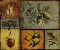Pines and Oak II by Art Licensing Studio - various sizes