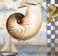 Shell Dreams 2 by Art Licensing Studio - various sizes