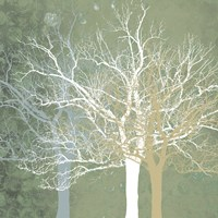 Quiet Forest Fine Art Print