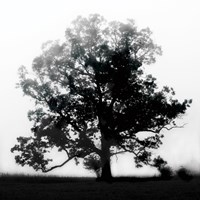 "18"" x 18"" Tree Photography"