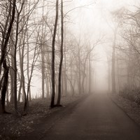 Foggy Path Fine Art Print