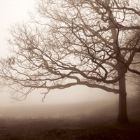 Silence by Erin Clark - various sizes