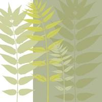 Field Greens Framed Print