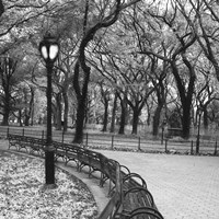 A Walk Through the Park Fine Art Print
