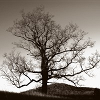 Oak Hillside by Erin Clark - various sizes - $28.49