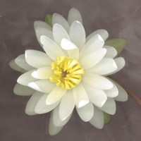 Water Lily by Erin Clark - various sizes