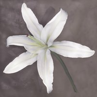 White Lily by Erin Clark - various sizes - $34.99