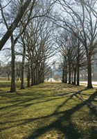 Branch Shadows by Erin Clark - various sizes