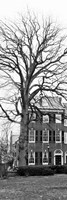 Tree with House by Erin Clark - various sizes