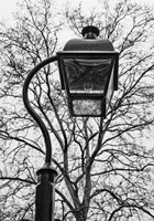 Lamp and branches by Erin Clark - various sizes