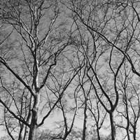 January Branches I Framed Print