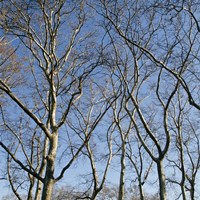 January Branches I (Color) by Erin Clark - various sizes