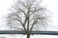 Manhattan Bridge Span with Tree by Erin Clark - various sizes